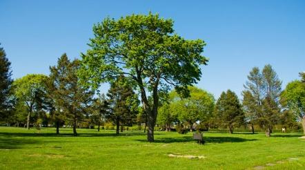 yeşil alanlar